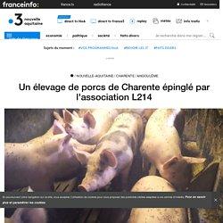 Un élevage de porcs de Charente épinglé par l'association L214