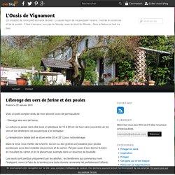 L'élevage des vers de farine et des poules - L'Oasis de Vignamont