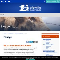 Elevage - La Fondation Droit Animal, Ethique et Sciences