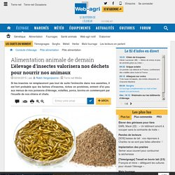 Alimentation animale d'insectes