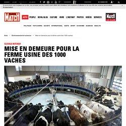 Élevage intensif - Mise en demeure pour la ferme usine des 1000 vaches