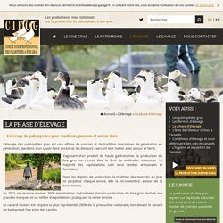 Elevage des Oies & Canards : la Phase d'Elevage