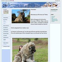 Elevage Des Rivieres De Thalos - eleveur de chiens Berger du Caucase