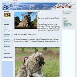 Elevage Des Rivieres De Thalos - eleveur de chiens Bullmastiff