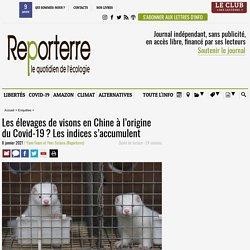 8 jan. 2021 Les élevages de visons en Chine à l'origine du Covid-19? Les indices s'accumulent