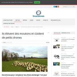Ils élèvent des moutons et s'aident de petits drones