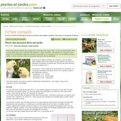 Elever des poussins dans son jardin