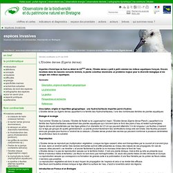 L'Elodée dense (Egeria densa) - Biodiversité Bretagne