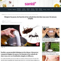 Éloigner les puces, les fourmis et les cafards hors de chez vous avec 12 astuces simples