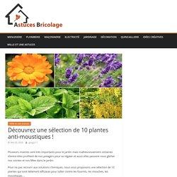 Découvrez une sélection de 10 plantes anti-moustiques !