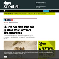 Elusive Arabian sand cat spotted after 10 years' disappearance