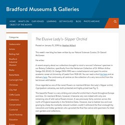 The Elusive Lady's–Slipper Orchid