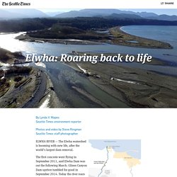 Elwha: Roaring back to life