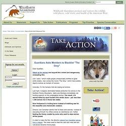 WildEarth Guardians : Email - Boycott Anti-Wolf Hollywood Film