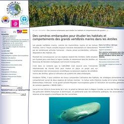 Des caméras embarquées pour étudier les habitats et comportements des grands vertébrés marins dans les Antilles - CAR-SPAW-RAC