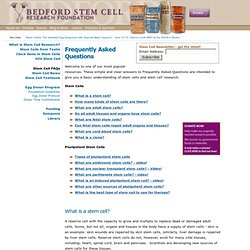 stem cell research position paper