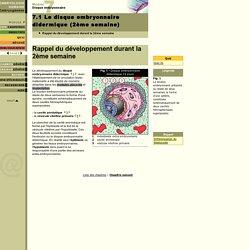Le disque embryonnaire didermique (2ème semaine)