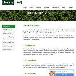 Hire a professional arborist for tree removal - HedgekingOttawa