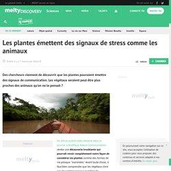 Les plantes émettent des signaux de stress comme les animaux