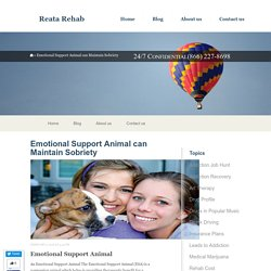 Emotional Support Animal can Maintain Sobriety - Reata Rehab
