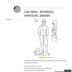 Les reins : émotions, exercices, plantes