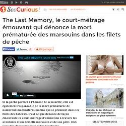 The Last Memory, le court-métrage émouvant qui dénonce la mort prématurée des marsouins dans les filets de pêche
