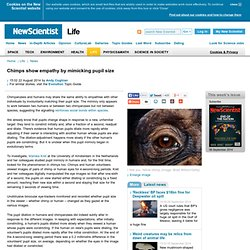 Chimps show empathy by mimicking pupil size - life - 22 August 2014