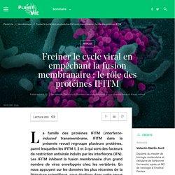 Freiner le cycle viral en empêchant la fusion membranaire: le rôle des protéines IFITM