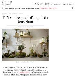 DIY : notre mode d'emploi du terrarium - Elle Décoration