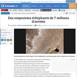 Sciences : Des empreintes d'éléphants de 7 millions d'années