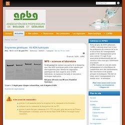 Empreintes génétiques APBG