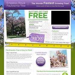 Empress Royal Paulownia Tree