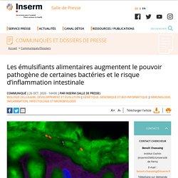 Les émulsifiants alimentaires augmentent le pouvoir pathogène de certaines bactéries et le risque d'inflammation intestinale