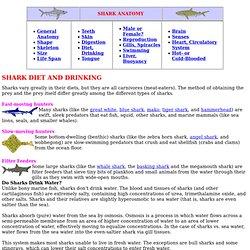 SHARK DIETS