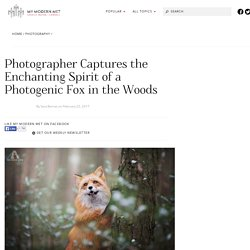Enchanting Fox Photography of a Creature Named Freya