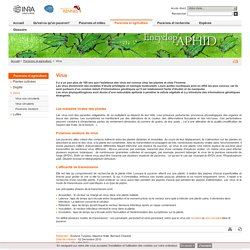 Encyclop'Aphid : l'encyclopédie des pucerons - Virus