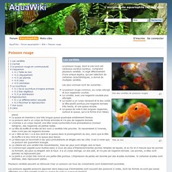 Poisson rouge - AquaWiki - Encyclopédie aquariophile