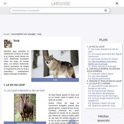 Encyclopédie Larousse en ligne - loup