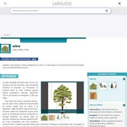 arbre latin arbor -oris