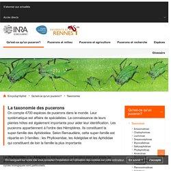 Encyclop'Aphid : l'encyclopédie des pucerons - Taxonomie