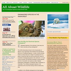 Endanger Species In The Rainforest