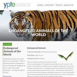 Endangered Animals of the World - Endangered Animals