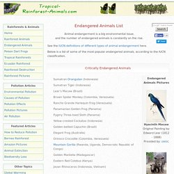 Endangered Animals List