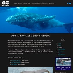 Why Whales Are Endangered — SEEtheWILD Wildlife Conservation Travel