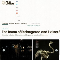 The Room of Endangered and Extinct Species 75005