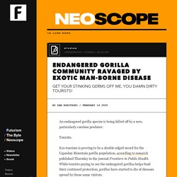 Endangered Gorilla Community Ravaged by Exotic Man-Borne Disease
