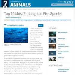 Top 10 Most Endangered Fish Species