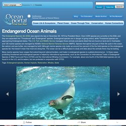 Endangered Ocean Animals