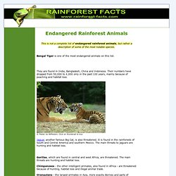 Endangered Rainforest Animals