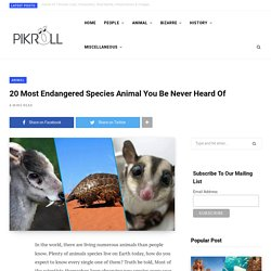 20 Most Endangered Species Animal You Be Never Heard Of